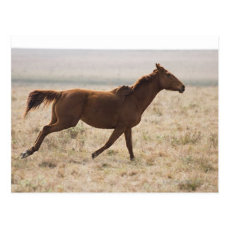 The wild horse (Equus ferus) is a species of the 2 Postcard