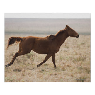The wild horse (Equus ferus) is a species of the 2 Poster