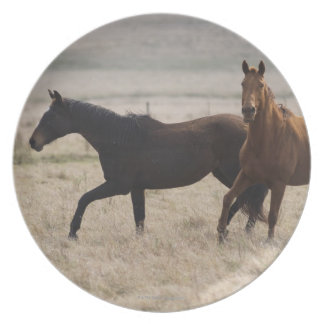The wild horse (Equus ferus) is a species of the Melamine Plate