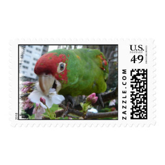 The Wild parrots of Telegraph Hill Stamp