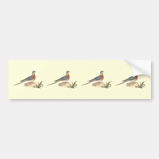 The Wild Pigeon (Ectopistes migratoria) Bumper Sticker