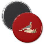 The Wild Pigeon (Ectopistes migratoria) Fridge Magnets