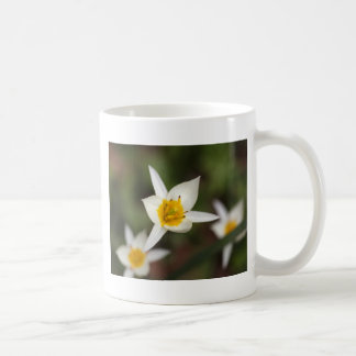 The wild tulip Tulipa turkestanica Coffee Mug