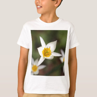 The wild tulip Tulipa turkestanica T-Shirt