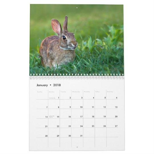 The WildRescue 2013 Calendar! Calendar