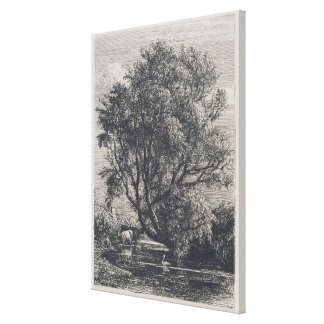 The Willow (etching) Stretched Canvas Prints