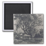 The Willow (etching) Magnets