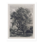 The Willow (etching) Post Card