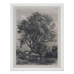 The Willow (etching) Poster