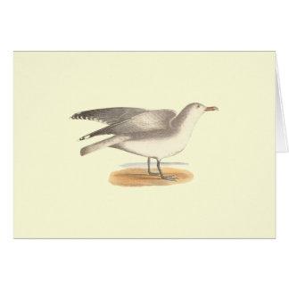 The Winter Gull(Larus argentatus) Greeting Card
