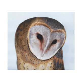 The wise old owl canvas print