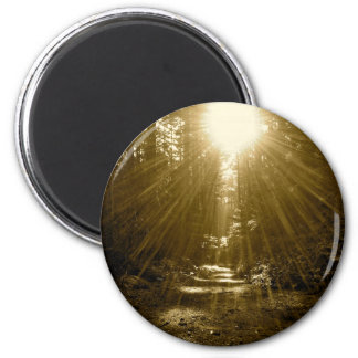 The Wise One's Forest 2 Inch Round Magnet