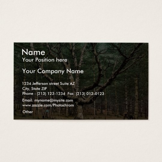The Wizard tree, Cathedral Woods, Intervale, N.H. Business Card