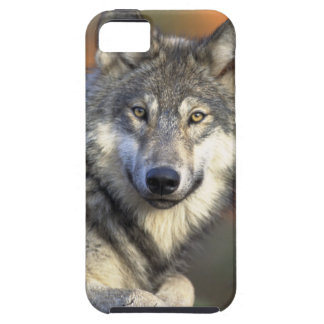 The Wolf iPhone SE/5/5s Case
