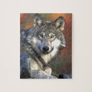 The Wolf Jigsaw Puzzle