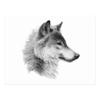 THE WOLF LEADER POSTCARD