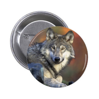 The Wolf Pinback Button