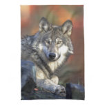 The Wolf Towels