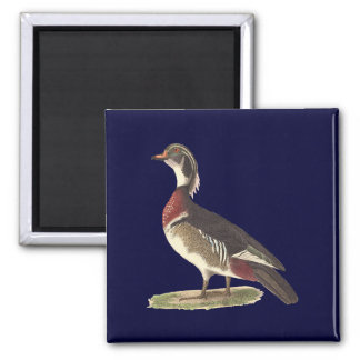 The Wood Duck(Anas sponsa) 2 Inch Square Magnet