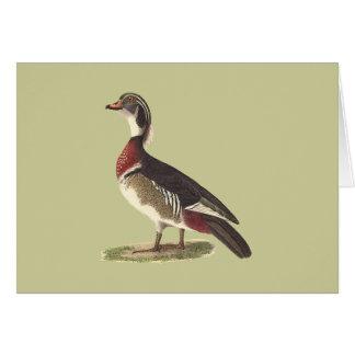 The Wood Duck(Anas sponsa) Greeting Card