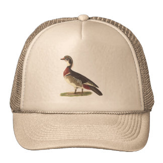 The Wood Duck	(Anas sponsa) Hats