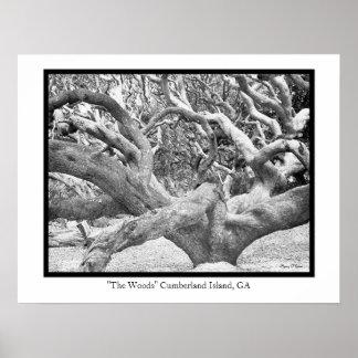 """The Woods"" Cumberland Island, GA Posters"