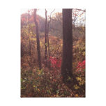 The Woods In Fall Stretched Canvas Prints