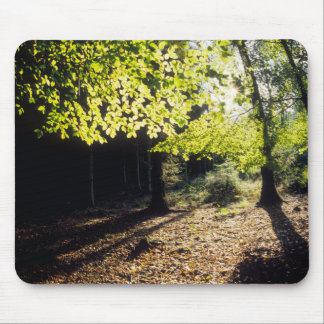 The Woods in Spring Mouse Pad