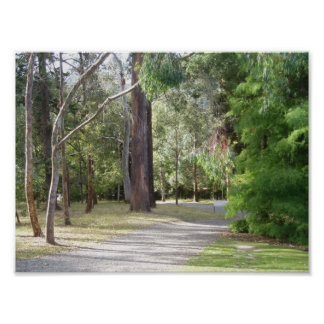The Woods of Dunedin's Botanical Gardens Print