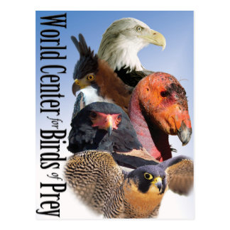 The World Center for Birds of Prey Postcard