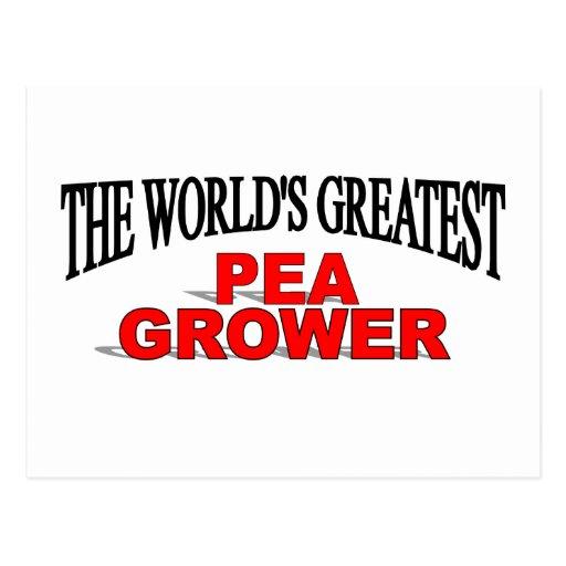 The World's Greatest Pea Grower Postcard
