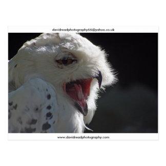 The Yawn Postcard