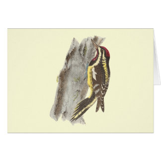 The Yellow-bellied Woodpecker(Picus varius) Greeting Card
