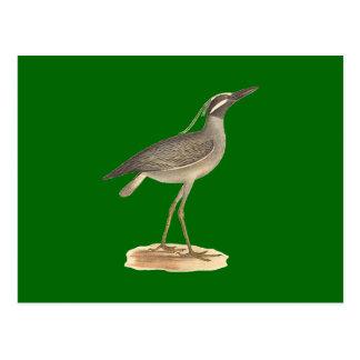 The Yellow-crowned Night Heron(Ardea violacea) Postcard