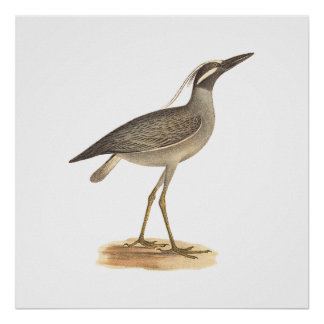 The Yellow-crowned Night Heron(Ardea violacea) Poster