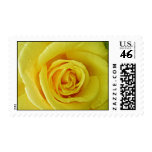 The yellow rose of stamps