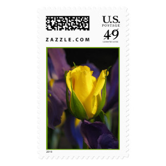 The Yellow Rose Postage
