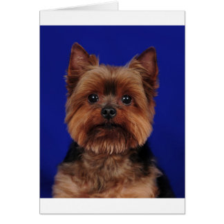 The Yorkie Greeting Card
