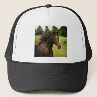 The young Arabian Trucker Hat