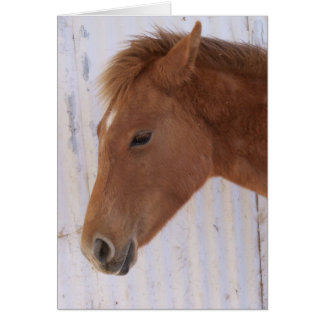 The Youngster Greeting Card