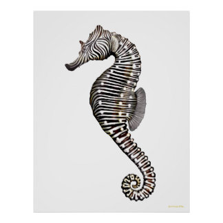 The Zebra Seahorse Art Poster