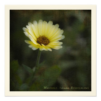 Theatrum Botanicum · Marigold Invite