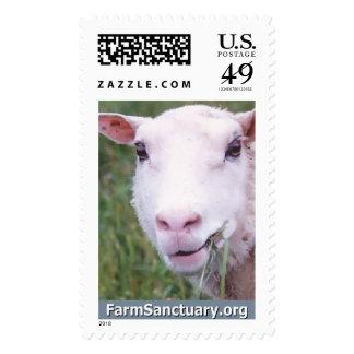 Thelma las ovejas estampilla