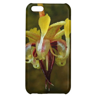 Theobroma Cacao Tree Flower iPhone 5C Cover