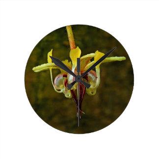 Theobroma Cacao Tree Flower Round Clock