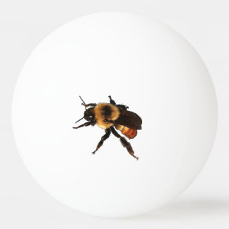 There is a Bee on Your Ball! Ping Pong Ball