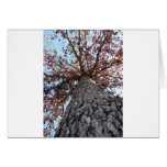 There is hope in a tree greeting card