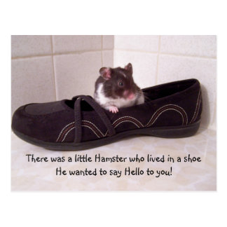 There was a little hamster.... postcard