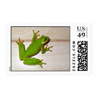 There's a Little Green Frog on Your Mail! Postage Stamp