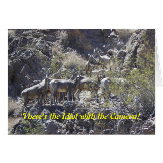 There's the Idiot with the Camera! Big Horn Sheep  Card